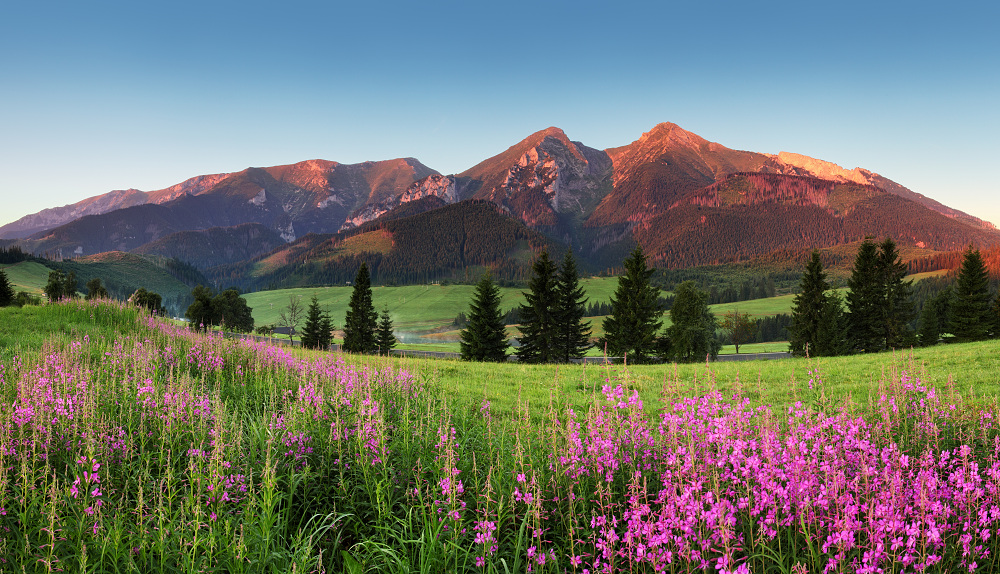 Beauty mountain panorama with flowers - Slovakia